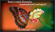 flowers-butterflies-and_541452