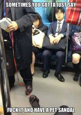pet sandal